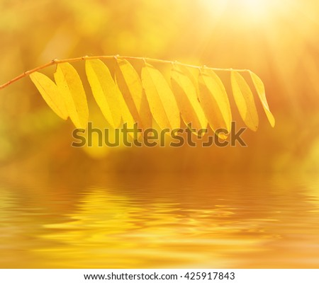 Autumn tree branch with yellow leaves, natural fall vivid sunny background with water reflection - stock photo
