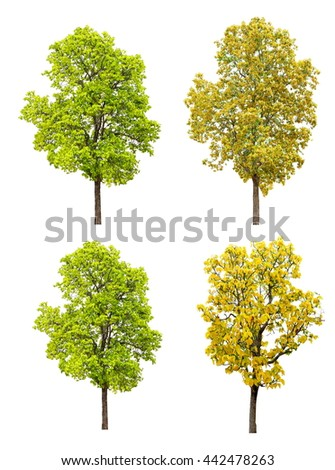 autumn tree group isolated collection on white background - stock photo