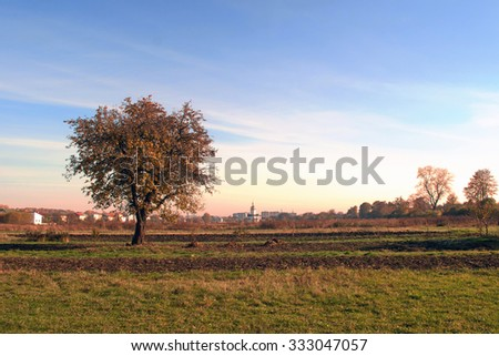 autumn tree is background sky - stock photo