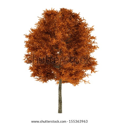 Autumn tree isolated. - stock photo