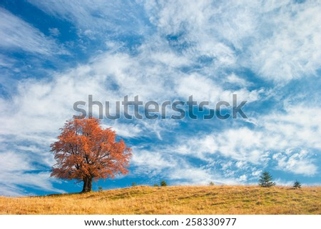 Autumn tree on a background of blue sky with beautiful clouds - stock photo