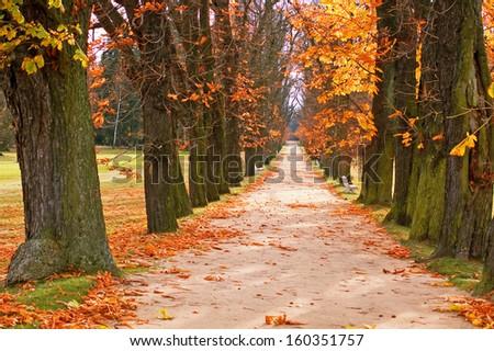 Autumn Tree Park Alley - stock photo