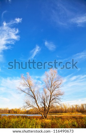 Autumn tree with falling leaves on the lake on the blue clear sky. Vertical orientation. Landscape - stock photo