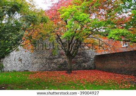 Autumn Tree within a stone wall Garden - stock photo