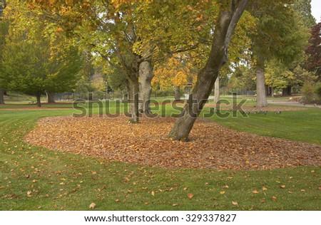 Autumn trees and foliage in a public park Tacoma Washington state. - stock photo