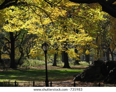 Autumn trees in Central Park, New York City - stock photo