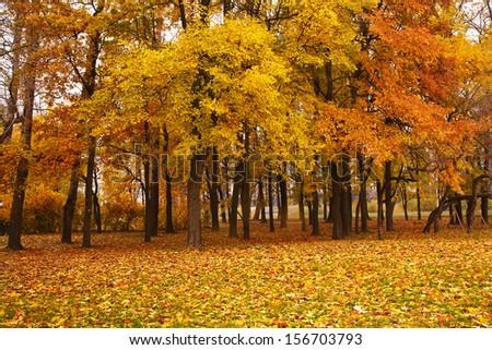 autumn trees in park  - stock photo