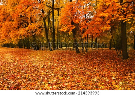 autumn trees in park  - stock photo