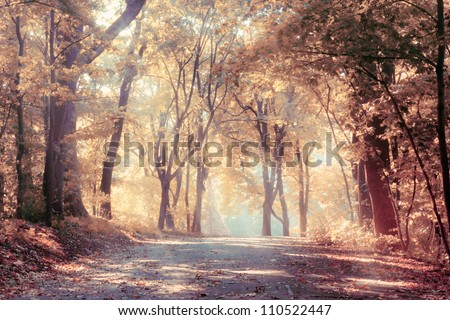 Autumn trees in sunbeams, an autumn landscape - stock photo