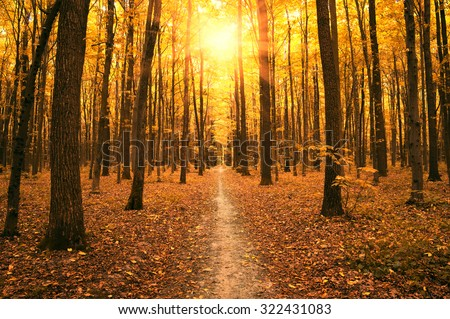 autumn trees in the forest - stock photo