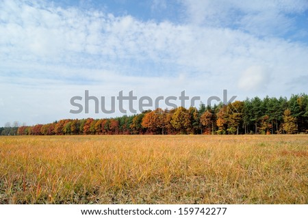 Autumn trees in the park. Autumn time in nature - stock photo