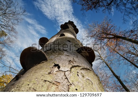 Autumn trees looking up - stock photo
