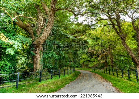 Autumn Trees Park Road Dublin - stock photo