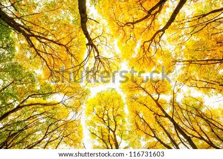 Autumn trees pattern - stock photo