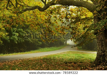 Autumn type landscape - stock photo