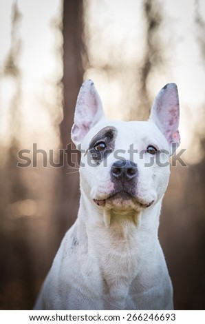 autumn vertical portrait of happy dog outside - stock photo