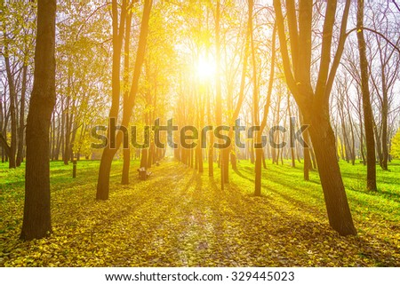 Autumn View on Park with Alley, Road from Brick in Fallen Foliage, Long Row of Trees and Shining Sun - stock photo