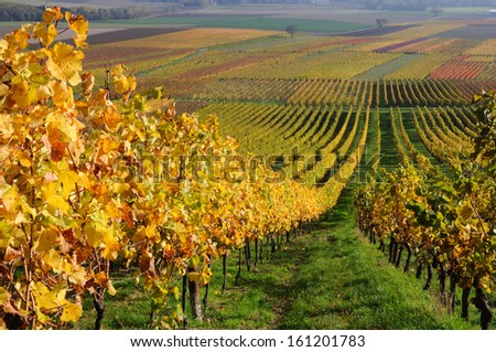 Autumn vineyard landscape in Rhine Valley, Germany - stock photo
