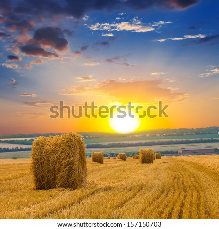 autumn wheat field at the sunset - stock photo