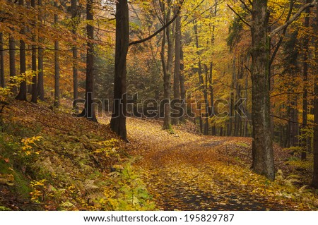 Autumn wood full of fallen leaf and the crossroad - stock photo