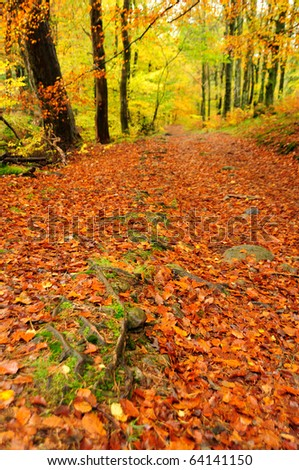 Autumn woodland scene in the English Lake District - stock photo