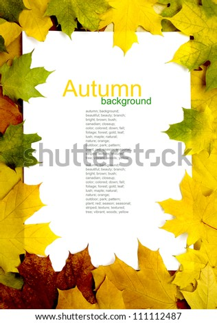 autumn yellow leaf frame pattern - stock photo
