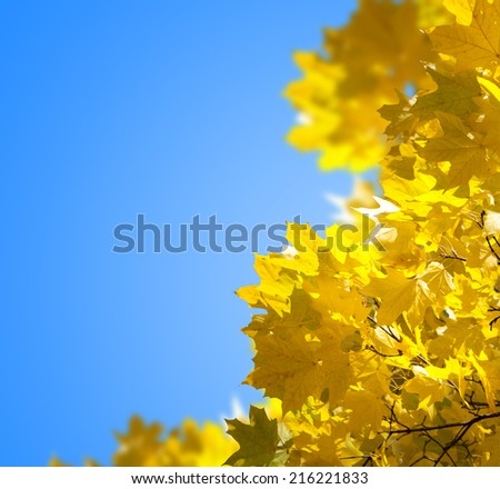 Autumn yellow leaves against the blue sky - stock photo