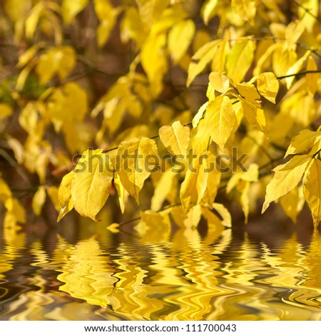 Autumn yellow leaves on branches reflection in water, selective focus - stock photo