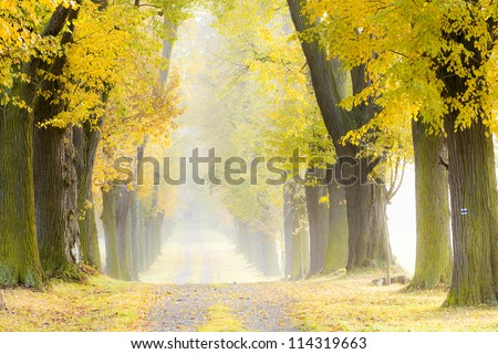 autumnal alley - stock photo