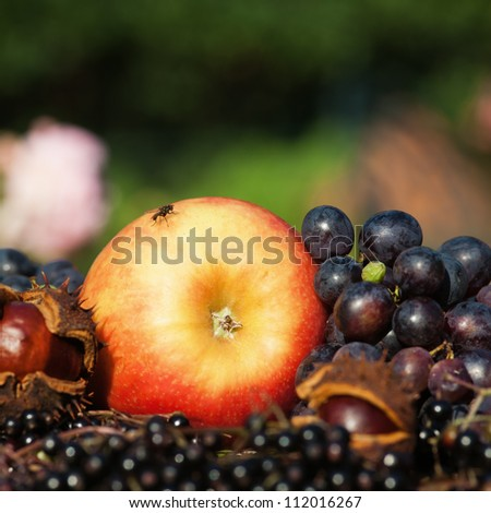 autumnal arrangement of an apple with other autumnal fruits - stock photo