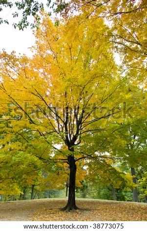 autumnal Central Park, New York City, USA - stock photo