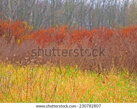 Autumnal colors.  - stock photo