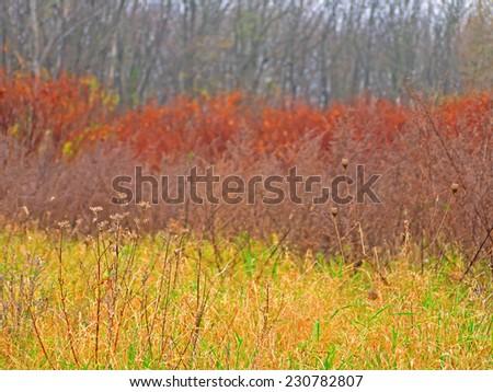 Autumnal colors.  - stock photo