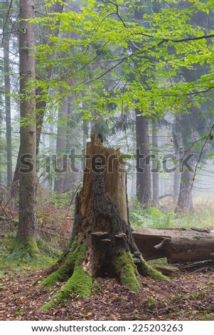 Autumnal deciduous stand with dead tree partly declined in foreground - stock photo