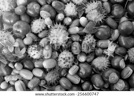 Autumnal detritus of conkers, acorns, beechnuts and cobnuts as a natural background - monochrome processing - stock photo