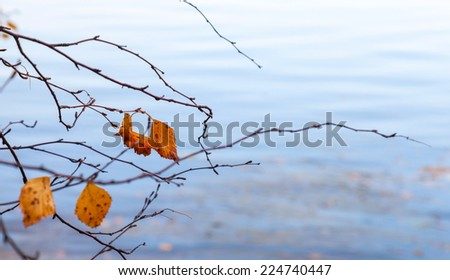Autumnal dry leaves on coastal tree with reflections in cold blue still lake water - stock photo