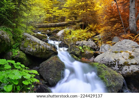 Autumnal forest with mountain creek in National park Sumava - Czech Republic - stock photo