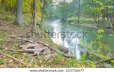 autumnal forest with wild river - stock photo