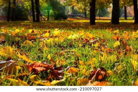 Autumnal leaves in the park. Natural background. - stock photo