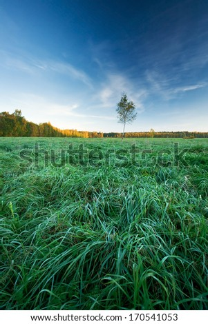 Autumnal morning in the field - stock photo