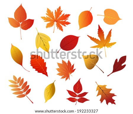 Autumnal red, yellow and brown leaves isolated on white background for seasonal design. Vector version also available in gallery - stock photo