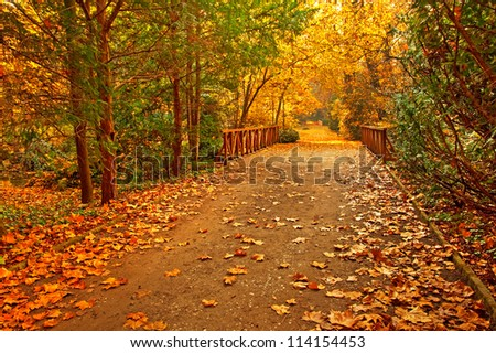 Autumnal scene in the forest - stock photo
