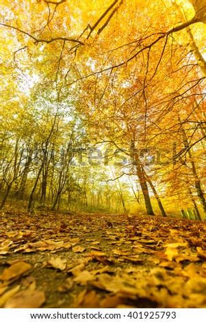 Autumnal scenery of park. Landscape of vegetation during fall.  Nature outdoor concept.  - stock photo