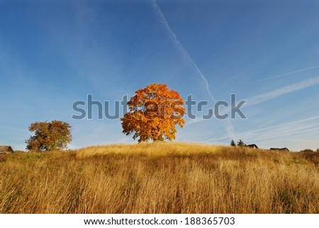 Autumnal trees against blue sky background  - stock photo