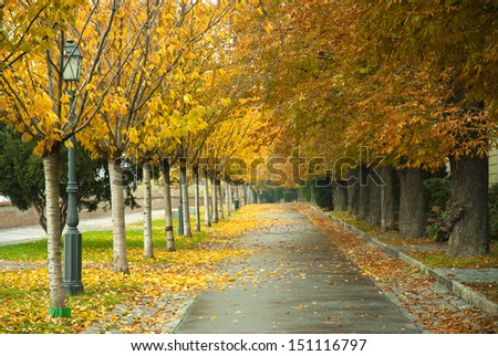 autumnal walkway with chestnut trees  - stock photo