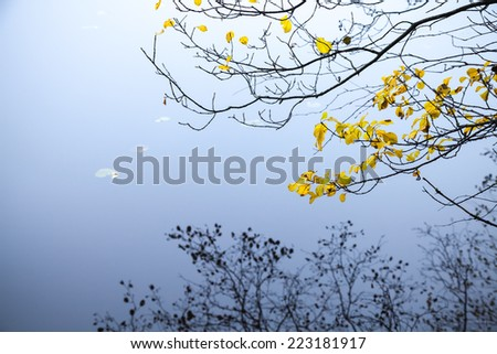 Autumnal yellow leaves on coastal tree branches with reflections in cold blue still lake water - stock photo