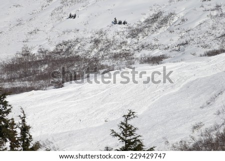 Avalanche Field  in the Kenai Peninsula - stock photo