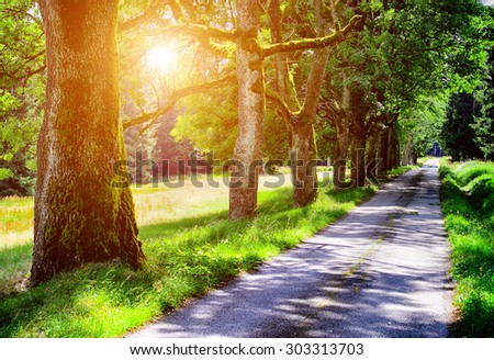Avenue of oak trees in park in summer time - stock photo