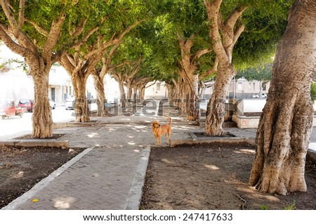 avenue of trees and stray dog in Siracusa, Sicily - stock photo
