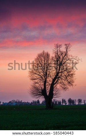 Avenue of trees at magical sunset with purple sky - stock photo